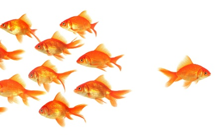 Photo_Goldfish_going it alone